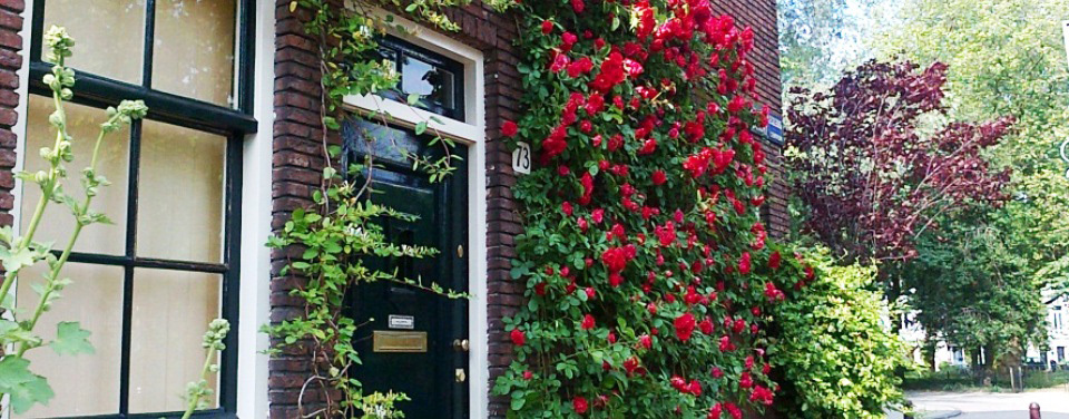 roses on a walk along a leafy canal in green Amsterdam